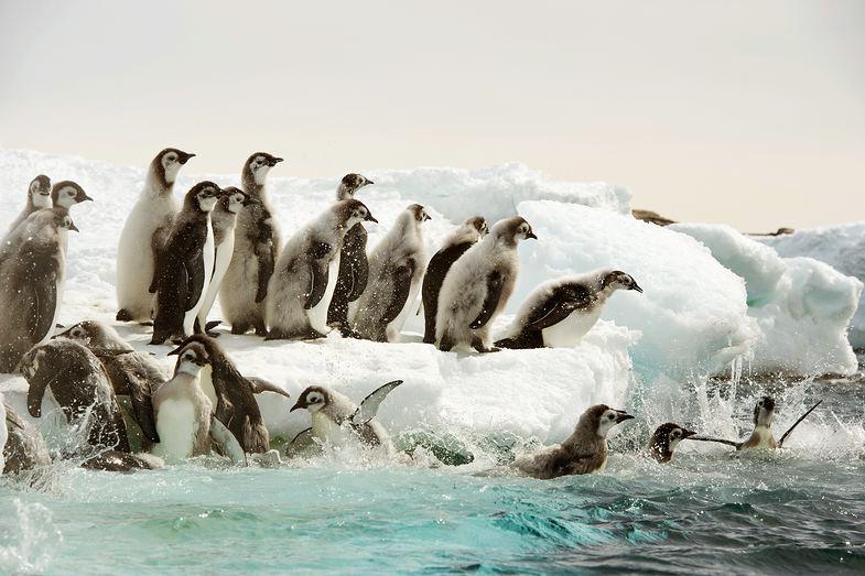 TV-Tipp: Antarktis. Die Reise der Pinguine