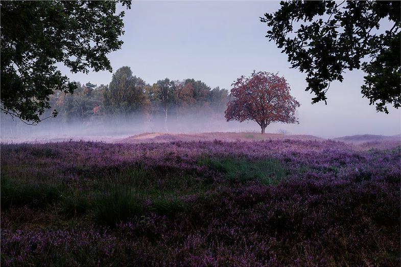 Rezension: Stephan Wiesner. Landschaftsfotografie Tutorial