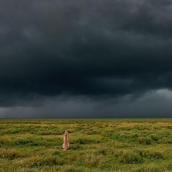 Rezension: Winfried Wisniewski. Tierfotografie: Der richtige Augenblick