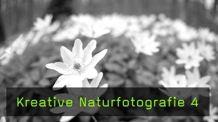 Film des Monats: Naturfotografie-Tutorial im Frühlingswald