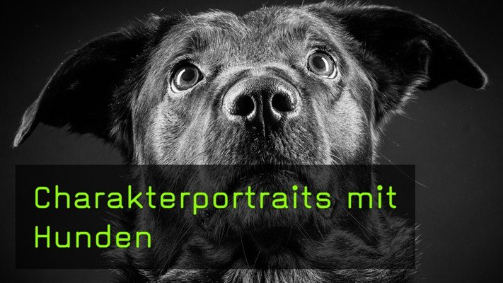Film des Monats: Charakterportraits mit Hunden