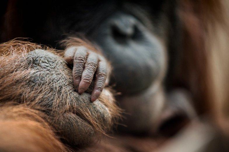Von Kopf bis Huf im Zoo Rostock