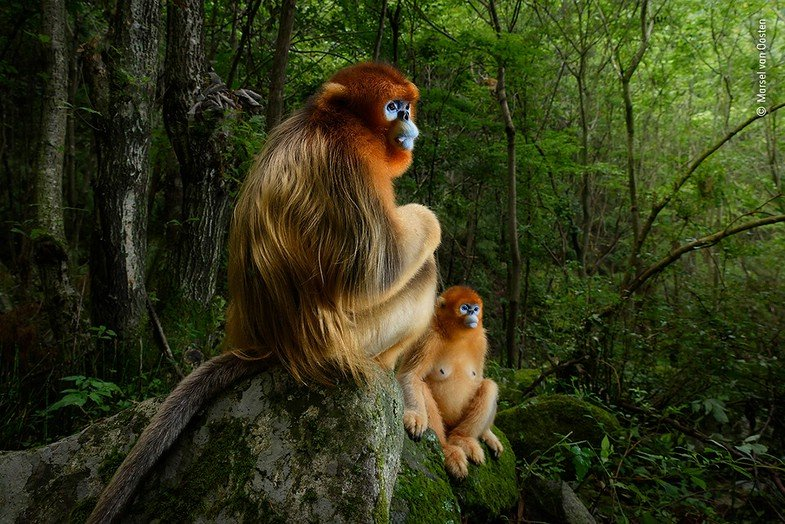 Marsel van Oosten ist Wildlife Photographer of the Year