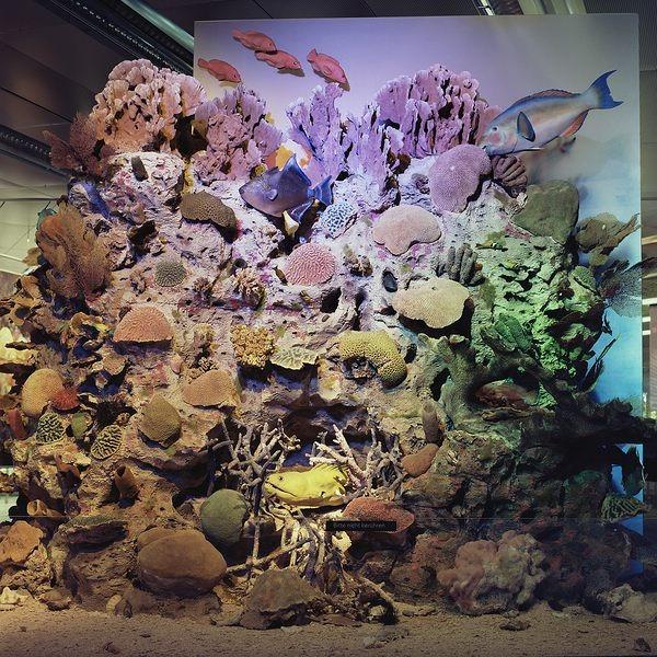 Roselyne Titaud. Géographies des limites humaines. Fotografien. Korallen und Fische