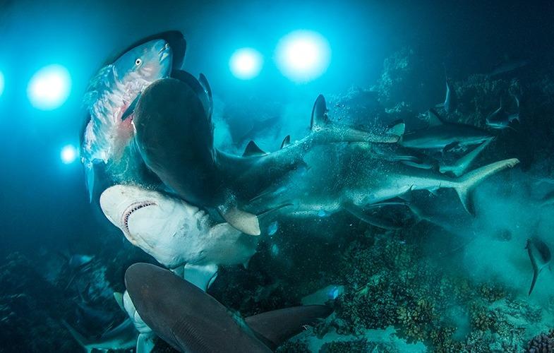 Richard Barnden ist Unterwasserfotograf des Jahres 2019