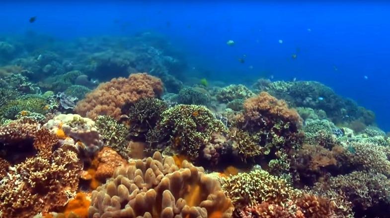 TVTipp: Geheimnisse der Ozeane. Folgen 1 und 2. Korallen in Asien