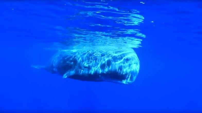 TVTipp: Geheimnisse der Ozeane. Folgen 3 und 4. Wal in Europa