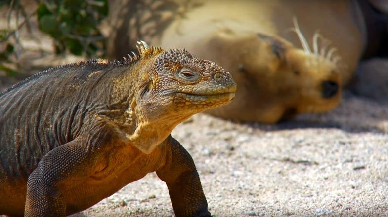 TVTipp: Geheimnisse der Ozeane. Folgen 3 und 4. Leguan in Südamerika