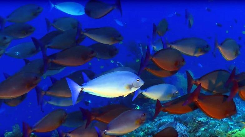TVTipp: Geheimnisse der Ozeane. Folgen 1 und 2. Fischschwarm in Australien