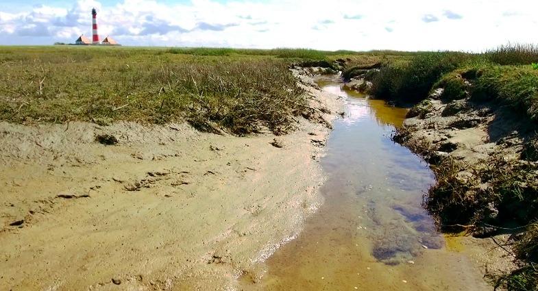 TVTipp: NaturNah: Manchmal Meer, manchmal Land