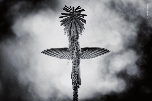 Rezension: Wildlife Fotografien des Jahres. Portfolio 28